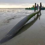 Die Leerrohre ragen aus dem Boden des Wattenmeeres hervor, um das Seekabel aufzunehmen bevor Rohr und Kabel in den Boden des Wattenmeeres eingefräst werden.